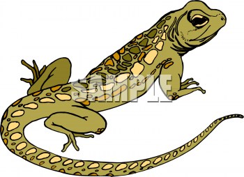 Royalty Free Lizard Clipart