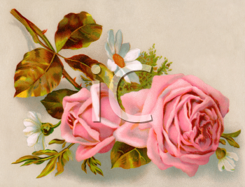 Victorian Rose Clipart