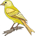 Canary Clipart