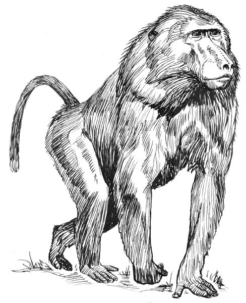 Free Baboon Clipart 1 Page Of Public Domain Clip Art