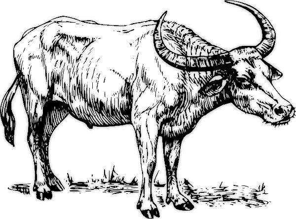 Free Water Buffalo Clipart