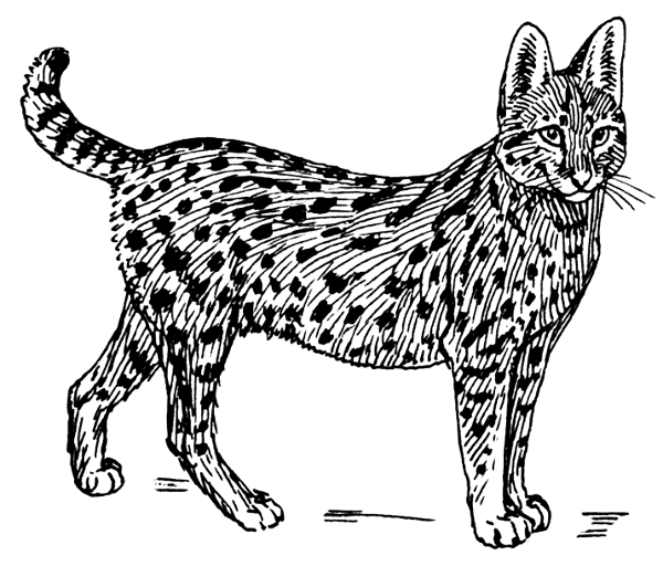 Free Serval Black and White Clipart