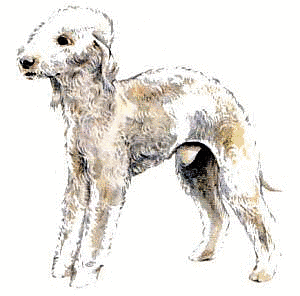 Free Dog Clipart