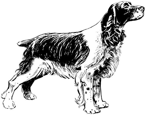 springer spaniel coloring pages - photo#31