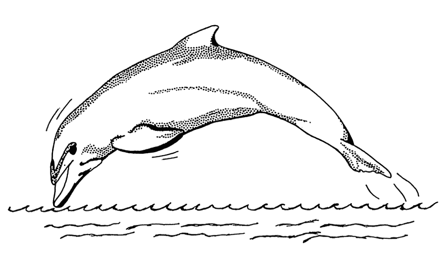 Free Black and White Dolphin Clipart