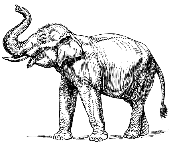 Free Black and White Elephant Clipart