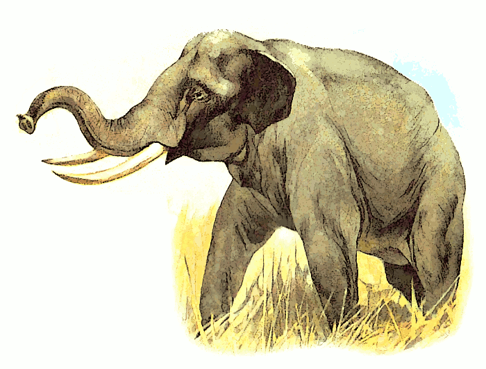 Free Trumpeting Elephant Clipart