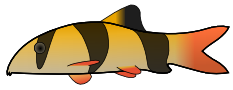 Free Clown Loach Clipart