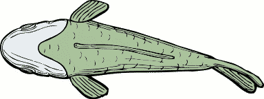 Free Green Fish Clipart