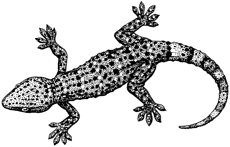 Free Gecko Clipart