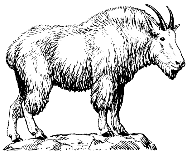 Free Wild Goat Clipart
