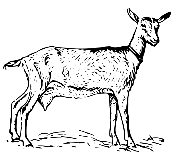 Free Goat Coloring Pages Clipart 1 page of Public Domain Clip Art