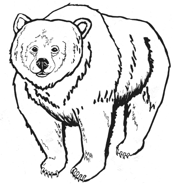 Free Kodiak Bear Clipart