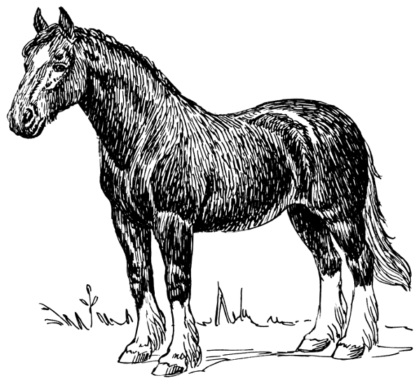 Free Clydesdale Horse Clipart