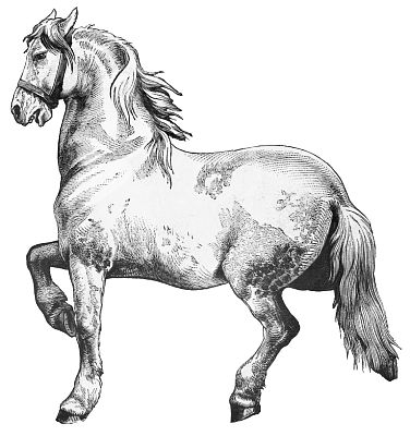 Free Draft Horse Clipart