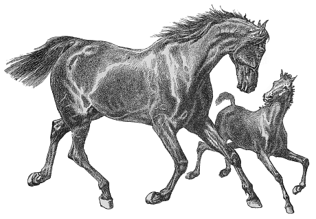 Free Running Horse Clipart