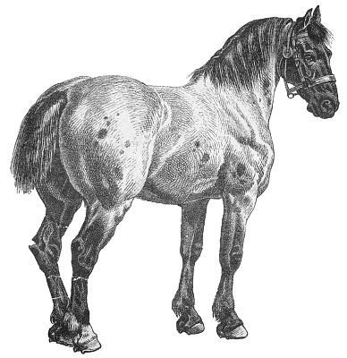 Free Percheron Clipart 1 page