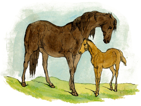 Free Baby Horse Clipart