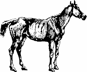 Free Old Grey Mare Clipart