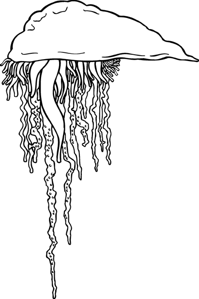 Free Black and White Jellyfish Clipart