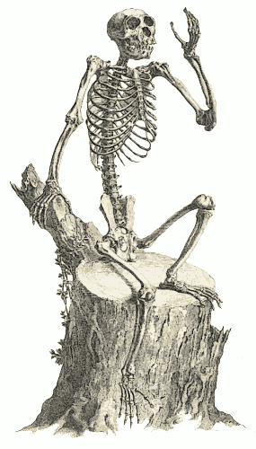 Free Monkey Skeleton Clipart