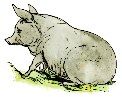 Free Sitting Pig Clipart