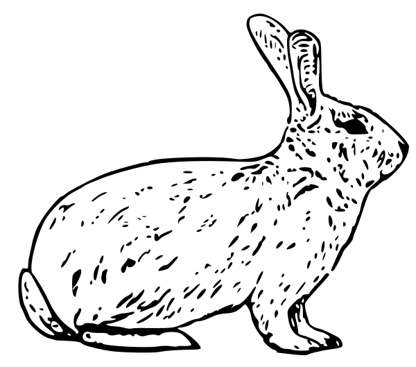 Free Domestic Rabbit Clipart