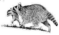 Free Black and White Raccoon Clipart
