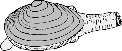 Free Black and White Seashell Clipart