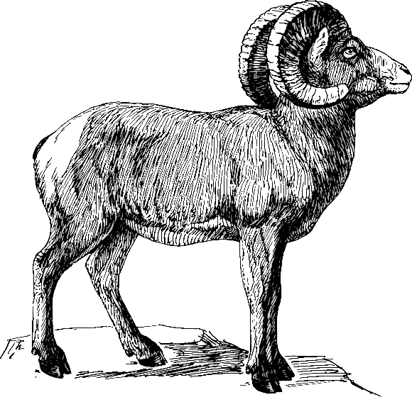 Free Sheep Clipart