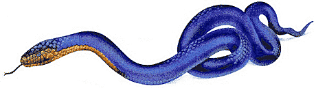 Free Snake Clipart - Clipart Picture 17 of 38