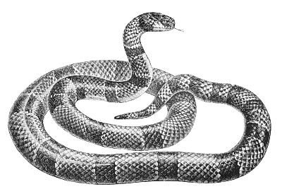 Free Snake Clipart