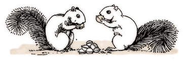 Free Squirrel Foraging Clipart