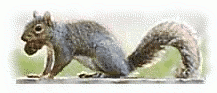 Free Squirrel Feeding Clipart