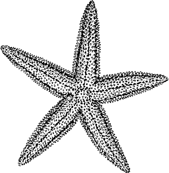 Free Black and White Starfish Clipart