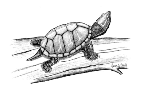 Free Turtle Clipart