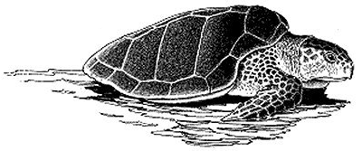 Free Black and White Turtle Clipart