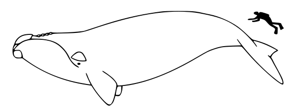 Free Black and White Whale Clipart