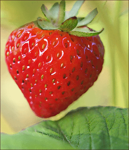 Free Berry Clipart, 2 pages of Public Domain Clip Art