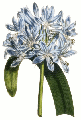 Free Lily Clipart - Public Domain Flower clip art, images and graphics