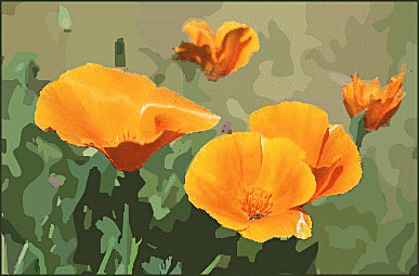 Free Poppy Clipart - Public Domain Flower clip art, images and ...