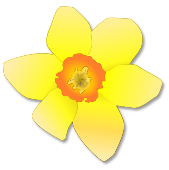 Flower Single Daffodil Spring Yellow