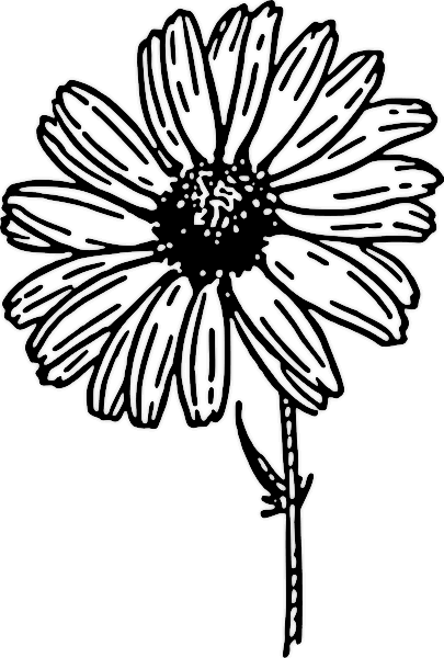 clip art flowers black and white. Free Daisy Clipart
