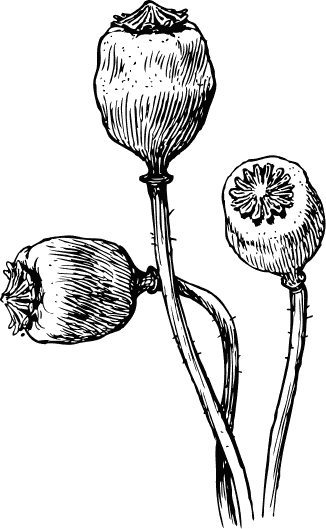 Free poppy clipart public domain flower clip art images and graphics free poppy clipart mightylinksfo