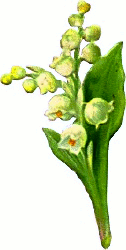 http://www.clipartpal.com/_thumbs/pd/plants/flowers/spray_lily_valley.png