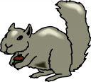 Squirrel Clipart