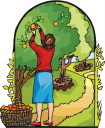 Orchard Clipart