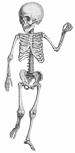 skeleton jigsaw puzzles - proprofs jigsaw puzzle games, Skeleton